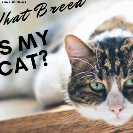 Kedimin Cinsini Nasıl Belirlersin - Safkanlara Karışık Irkların Belirlenmesi - Kediler