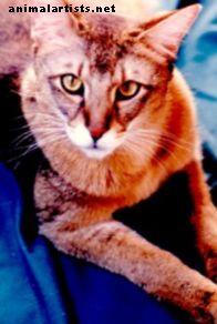 4 eksootilist kassi, kes teevad suurepäraseid lemmikloomi