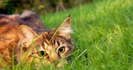 Kui palju ma pean maksma oma kassi lemmikloomakindlustuse eest?