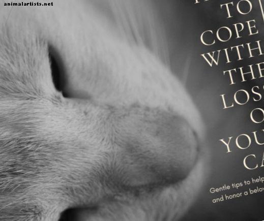 Kediniz Öldüğünde: Kederli Kalbinizi İyileştirmek İçin Nazik İpuçları - Kediler