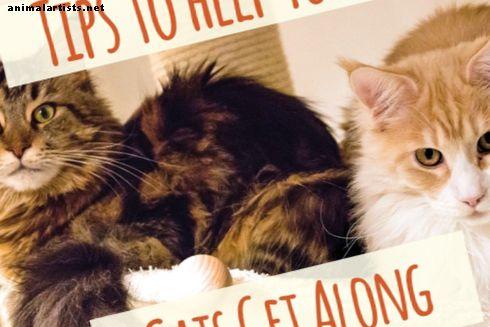 बिल्लियाँ नहीं मिल रही हैं?  उन्हें एक-दूसरे से लड़ना बंद करने के टिप्स मिले - बिल्ली की
