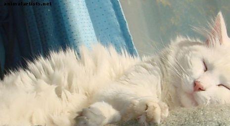 बिल्ली प्रेमियों के लिए महान वेबसाइटें: तथ्य, तस्वीरें और वीडियो - बिल्ली की