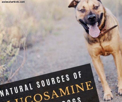 कुत्तों के लिए प्राकृतिक ग्लूकोसामाइन: चिकन फीट, बीफ ट्रेकिस, और अधिक