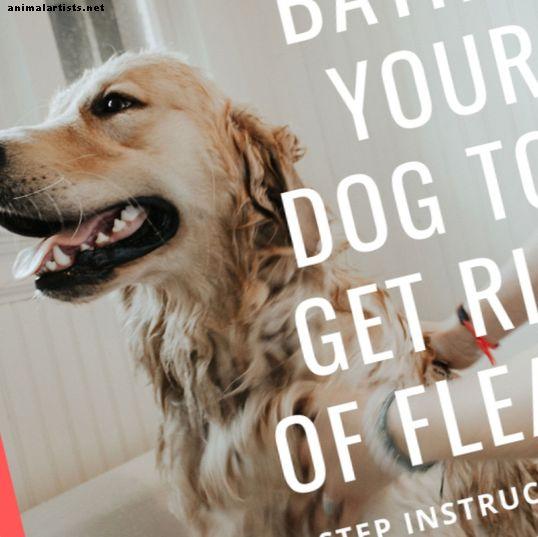 Wie man Hundeflöhe mit einem Bad und einer Seife loswird - Hunde