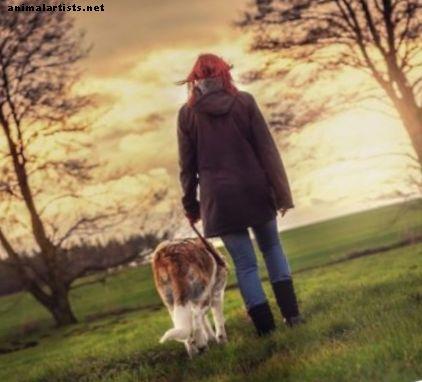 आलसी या व्यस्त कुत्ते के मालिकों के लिए व्यायाम समाधान