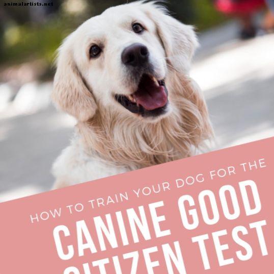 Kako trenirati psa za pasji test dobrog građanina
