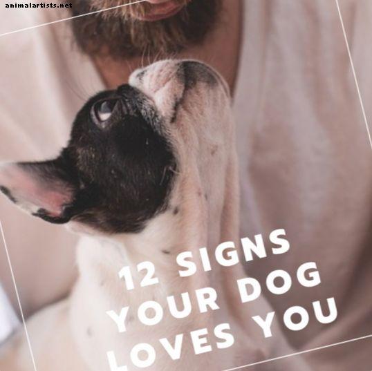 12 आपका कुत्ता आपको प्यार करता है और कैसे अपने कुत्ते को प्यार करता है पर हस्ताक्षर करता है