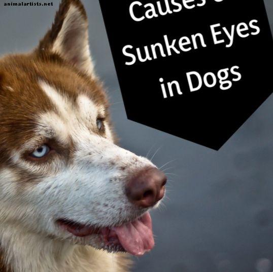 ¿Por qué los ojos de mi perro se ven hundidos?