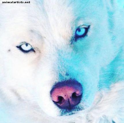 Glitimo alergija ir netoleravimas šunims - Šunys