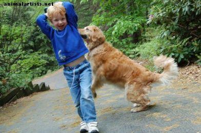 Fünf Hunderassen, die die besten rund um Kinder sind