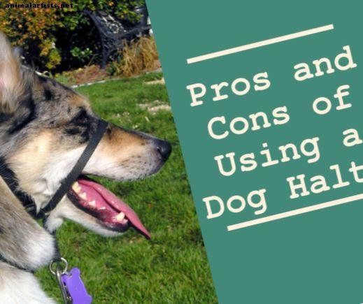 Hundetraining: Vor-und Nachteile der Verwendung eines Dog Halti