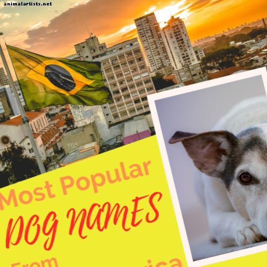 Los mejores nombres de perros de América Latina