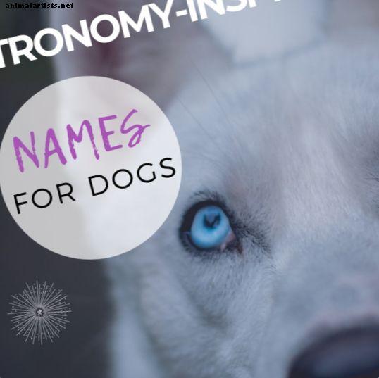 15 astronominių jūsų šuns vardų