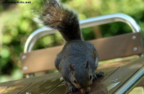 10 eksotiske kæledyr, der er lovlige i Indiana - Eksotiske kæledyr