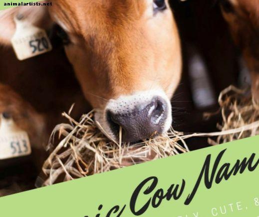 75 nombres de vaca clásicos