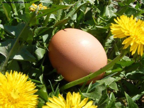 Tehke oma munaraku haaraja tööriist - Taloomad kui lemmikloomad