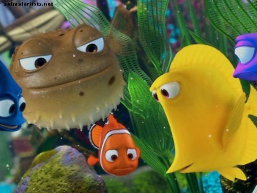 """Ako postaviť akvárium """"Finding Nemo"""" alebo """"Finding Dory"""""""