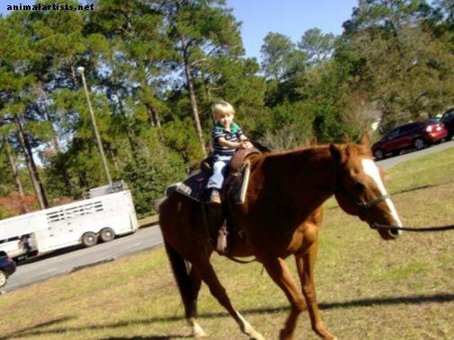 Hur man lugnar en nervös häst (med video)
