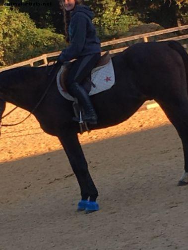 Kuidas õpetada uuele sõitjale õiget tasakaalustatud sõiduasendit - Hobused