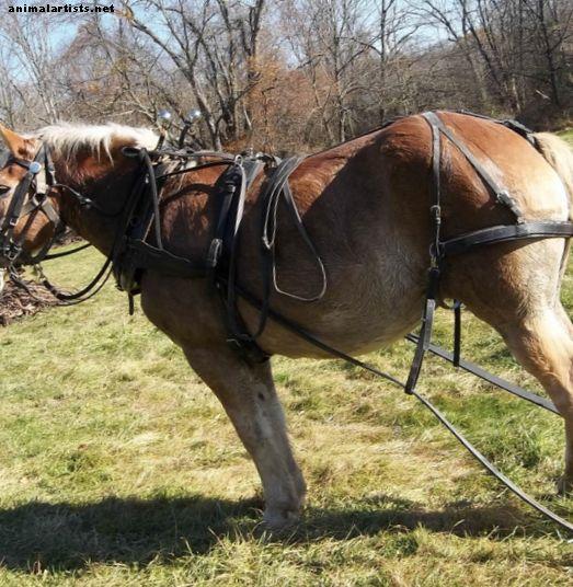 Rad s nacrtima konja na maloj, održivoj farmi - Konji