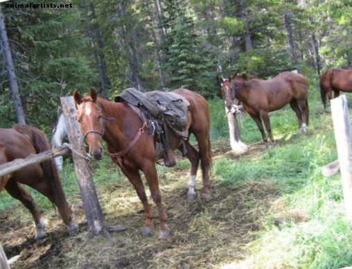 Bucking: Kāpēc zirgs to dara un kā to apturēt?