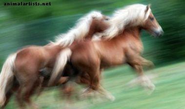 Fajne pomysły na nazwy koni - Konie