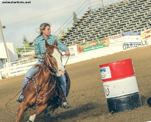 Top 5 Pferderassen für Barrel Racing - Pferde