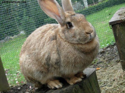 Hračky pre králikov - králiky