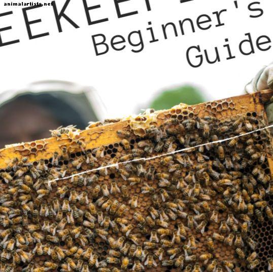 मधुमक्खी पालन शुरुआती गाइड: कैसे एक बीहाइव सेट करने के लिए