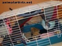 Formas simples y fáciles de personalizar una jaula para ratas - Roedores